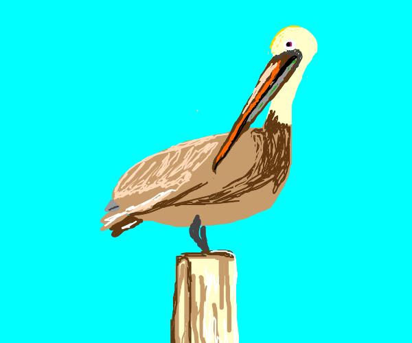 Classic Pelican