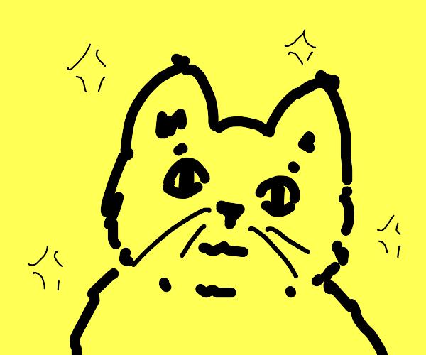 cute lil black cat