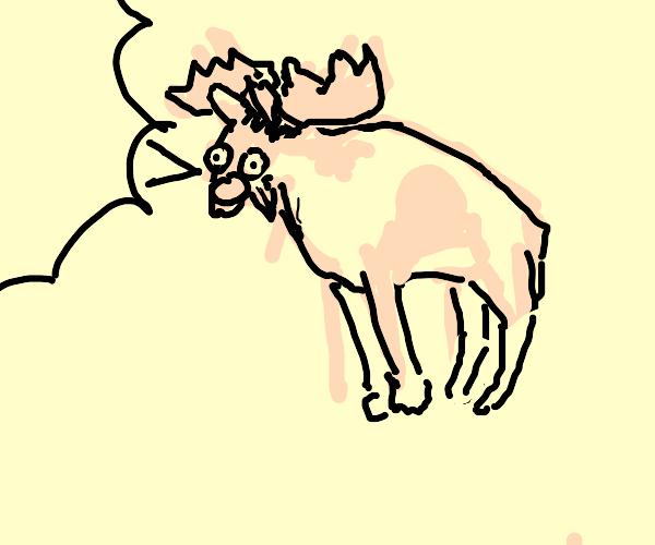 moose screams