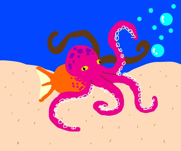 Octopus fish