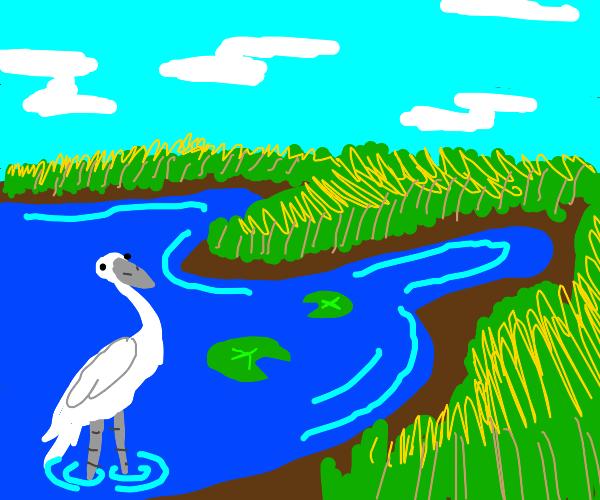 pretty scenery of a marshland