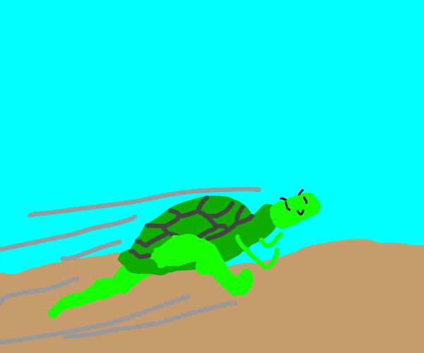 Turtle is speedy