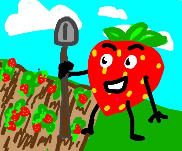 Happy strawberry farmer strawberry