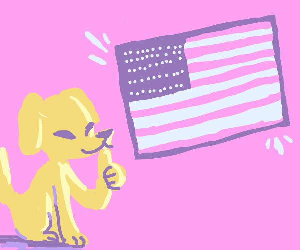 Dog likes the USA