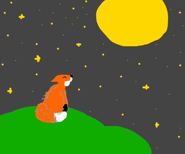 Fox Looks up at Moonlight