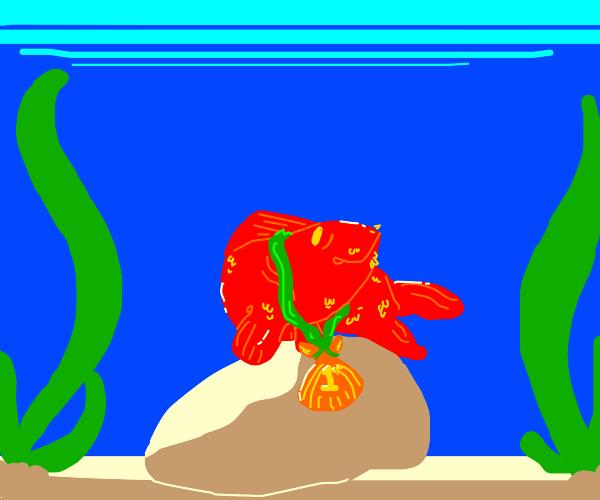 fish won! seaweed!