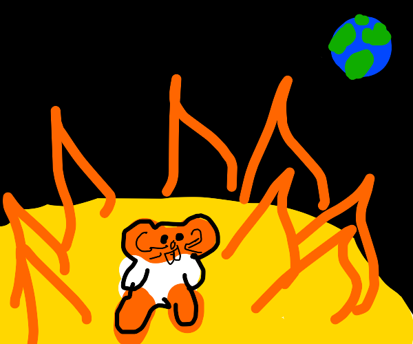 a hamster on the  sun