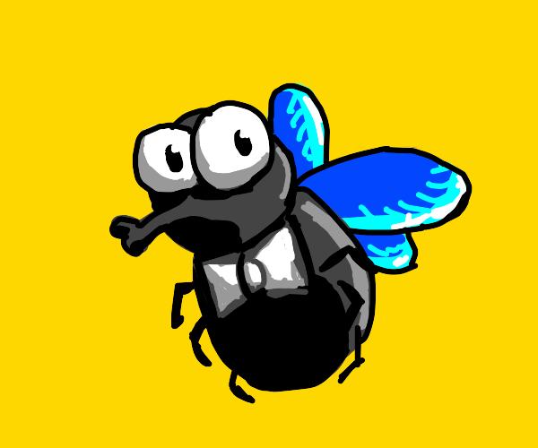 dapper fly