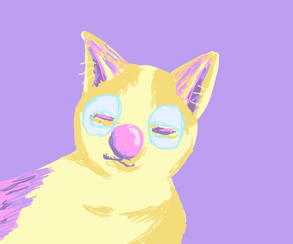 Cat Clown