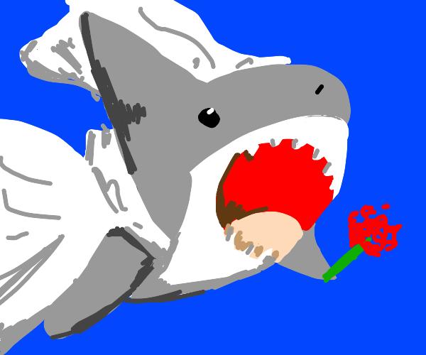 Shark bride