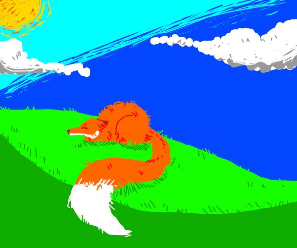 Sleeping fox with big tail