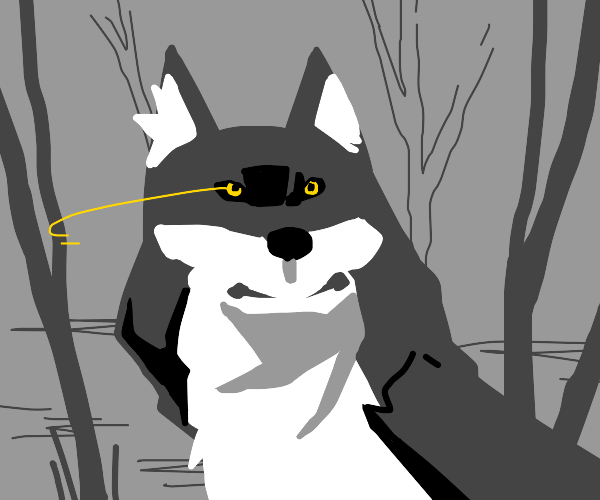 wolf looks to the right