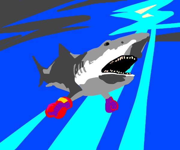 shark with boxing gloves