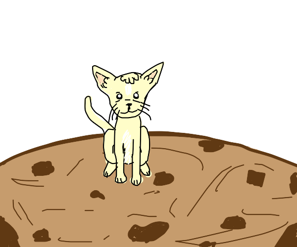 Cat on cookie