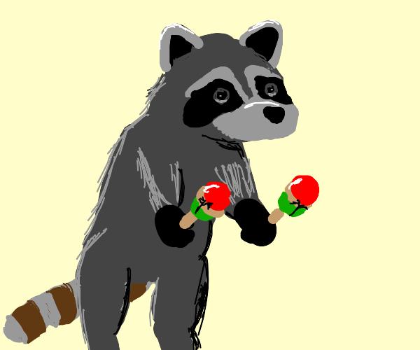Raccoon with maracas