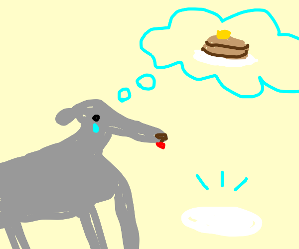 A dog wants pancakes but has none.