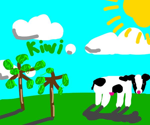 A kiwi farm with cows