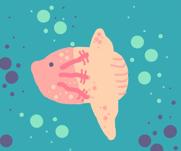 half axolotl half mola mola