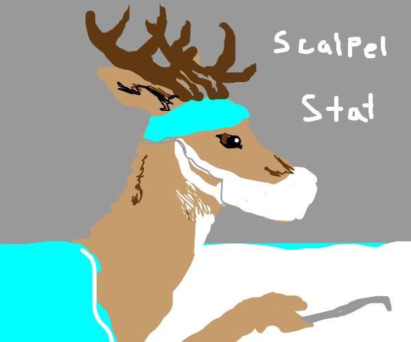 a deer surgeon