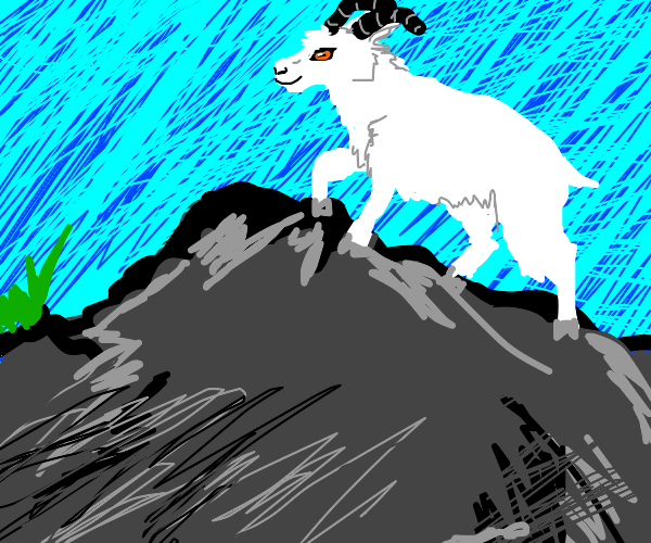 a goat on a mountain