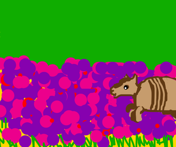 armadillo sniffing a wild flower