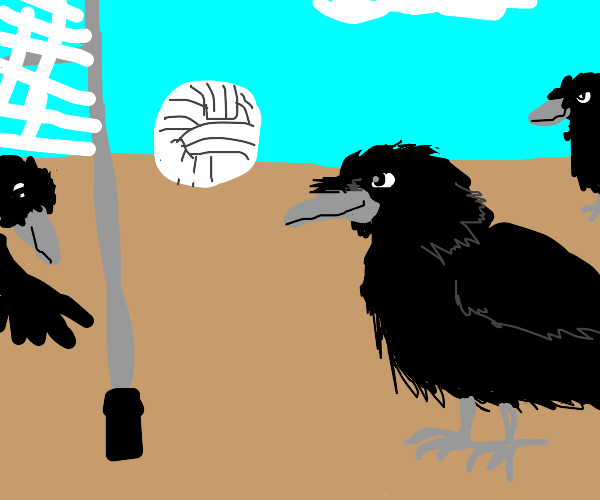 Crows playing volleyball