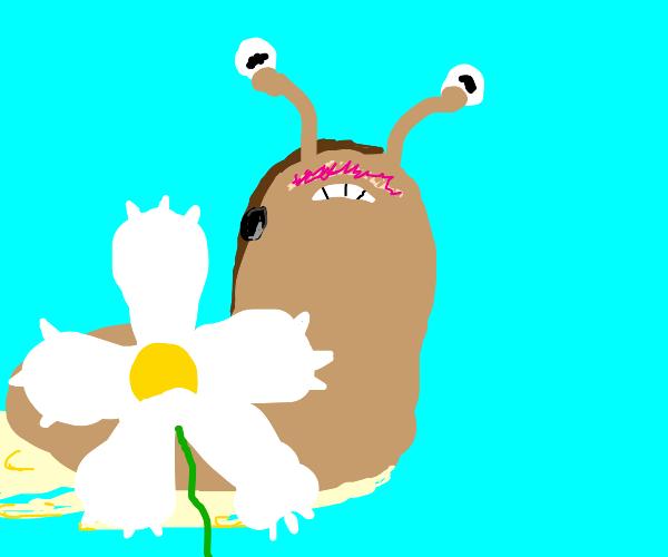 Slug hides its shellless body with a daisy