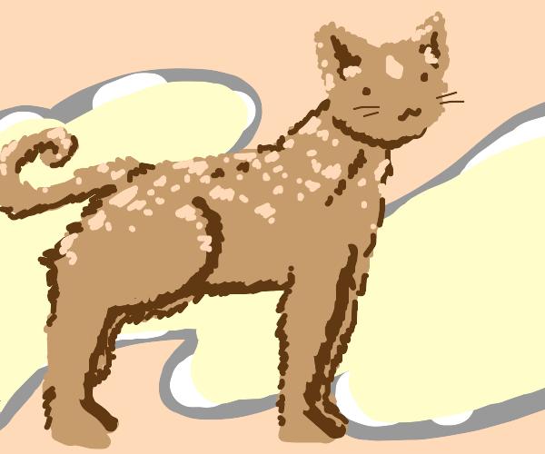 cat horse