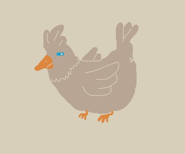 Dark shady hen