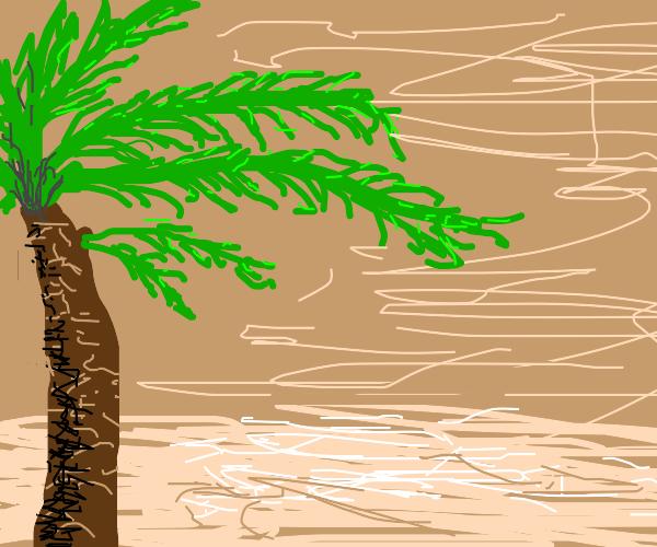 Hurricane winds blow on palm tree.