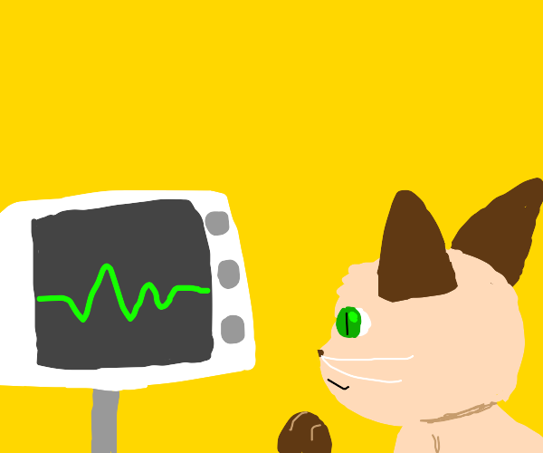 Cat looks at heart monitor