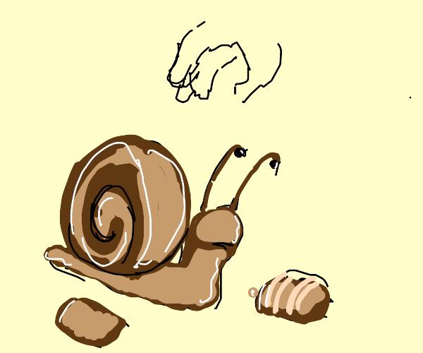 Chocolate snail is sad