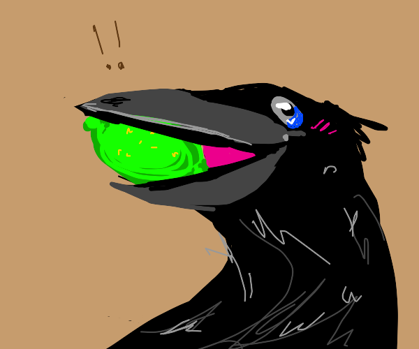 Crow holding Lime
