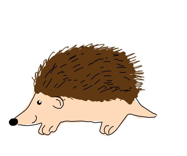 Lil' hedgehog (pls no Sonic)