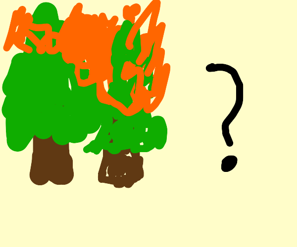 Forest Fires, Why?
