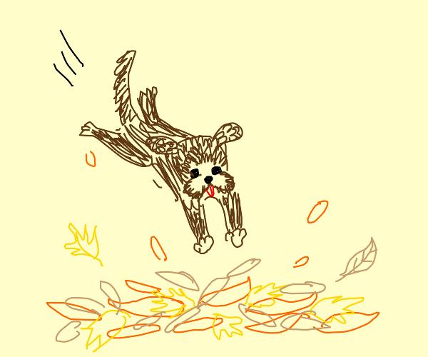 Dog jumps on leaf pile