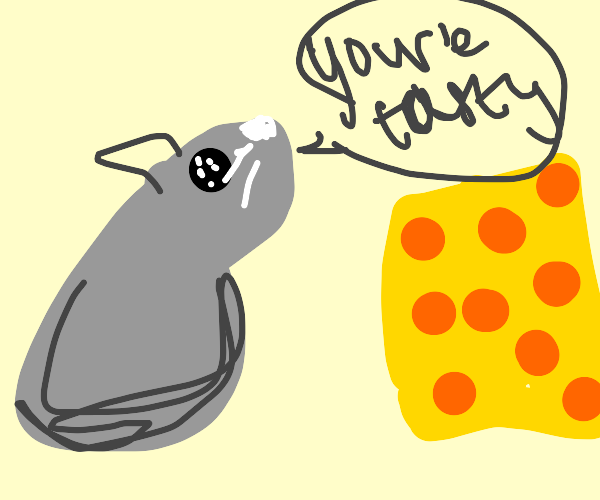 Rat calls cheese tasty
