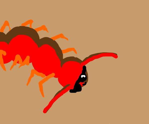 Mellow Centipede