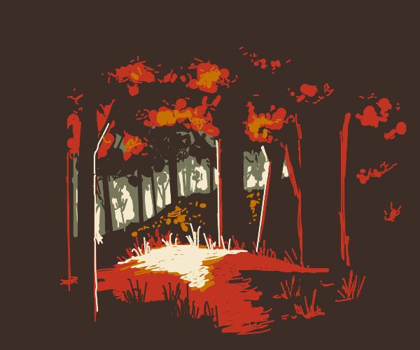Autumn trees in the night