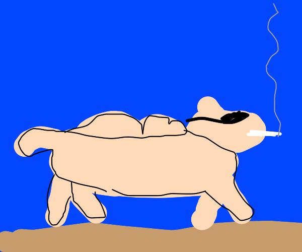 camel smokin in a desert