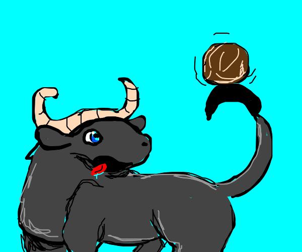 buffalo stealing a coconut