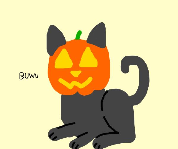 The Pumpkin Headed Kitten, BEWARE!