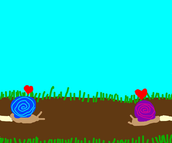 Snails wants to get near to each other