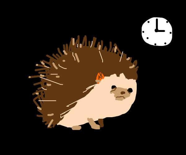 Hedgehog is late!