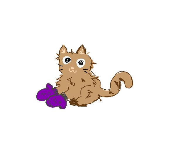 kitten with mittens