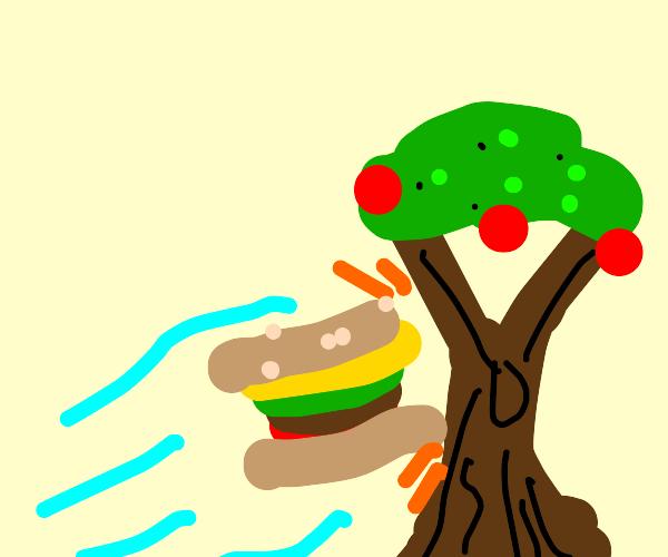 Burger runs into tree