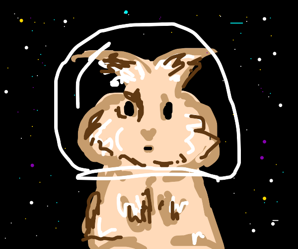 fluffy space rabbit fly's througt stars