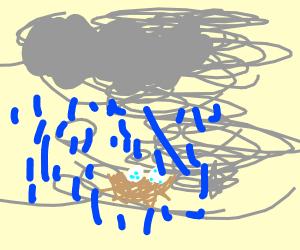 Nest in a Monsoon