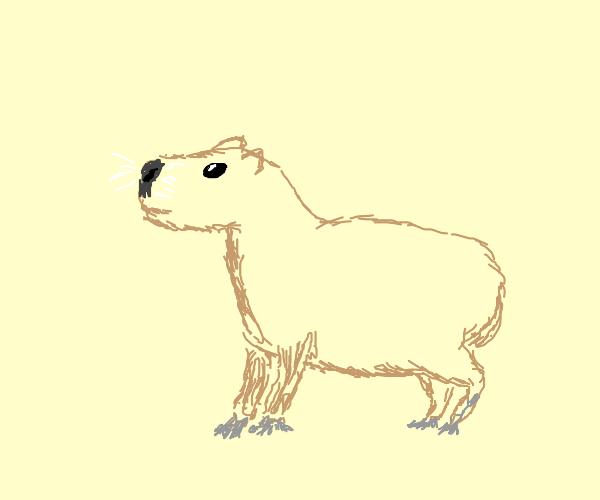 Doodle Capybara