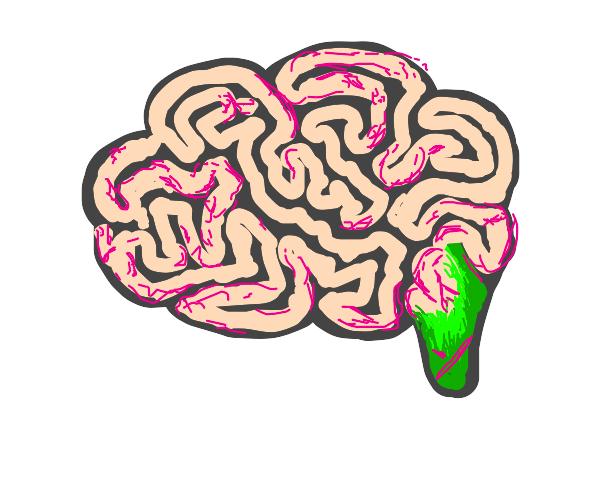 green brain stem